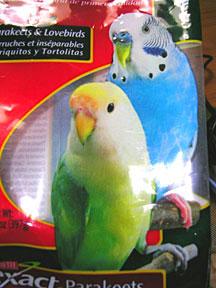 ケイティのモデル鳥さん
