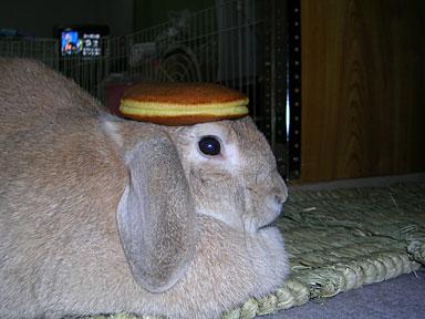 どら焼き帽子
