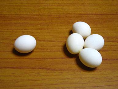 五個目の卵